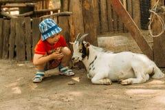 男孩坐在一只白色山羊附近的,在孩子和动物之间的友谊 在动物园里 接触动物园 动物疗法 免版税库存图片