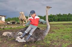 男孩坐驼鸟 免版税库存照片