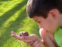 男孩好奇蟾蜍 库存照片
