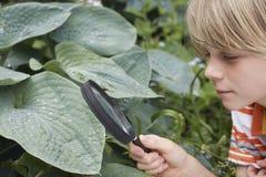 男孩审查的叶子通过放大镜 库存图片