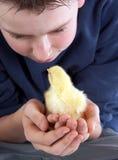 男孩小鸡见面 库存照片