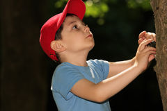 男孩少许查找的结构树 免版税图库摄影
