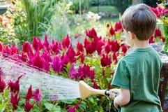 男孩庭院浇灌的一点 免版税库存图片