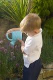 男孩庭院草本浇灌的一点 免版税库存照片