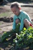 男孩拉出地面一个大萝卜 免版税库存图片