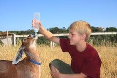 男孩提供的山羊 免版税库存图片