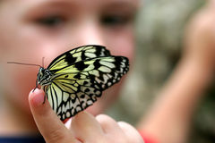 男孩有选择性蝴蝶的重点 免版税图库摄影