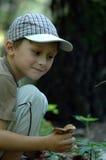 男孩森林年轻人 库存图片