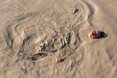 年轻男孩游泳在泥泞的水中 图库摄影