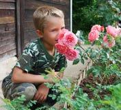 男孩玫瑰气味 免版税库存照片