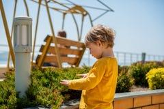 男孩被接触递植物 免版税库存照片