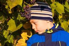 男孩被采摘的葡萄 库存照片