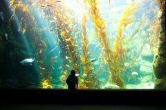 男孩观看的海带森林 图库摄影