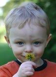 男孩逗人喜爱的flowe嗅到的一点 免版税库存照片