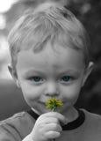 男孩逗人喜爱的flowe嗅到的一点 免版税图库摄影