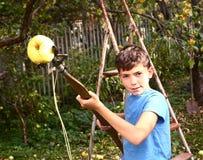 男孩采从树的成熟苹果与特别设备 免版税图库摄影
