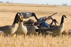 男孩鹅狩猎 免版税库存图片