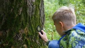男小学生在植物和nasekomye的公园研究中通过放大镜 外界的研究,幼儿园 免版税库存图片