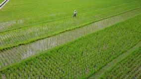 男性农夫空中风景米的调遣 股票视频