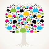 男性和女性消息结构树 库存照片