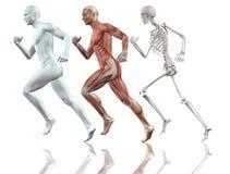男性图赛跑 免版税库存图片