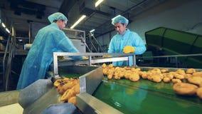 男性工作者切在一半的土豆肿胀 影视素材
