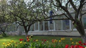 男性工作者洗涤的温室在美丽的庭院里 股票视频