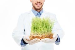 男性工程师显示修改过的植物 免版税库存照片