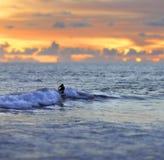 男性或女性冲浪者冲浪和在日落狂放的海的乘坐的波浪匿名剪影在秀丽的惊人的橙色天空下ho 图库摄影