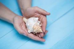 男性手指拿着在蓝色背景的一个贝壳 图库摄影