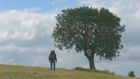 男性旅游远足与背包后面,走通过树的人,挑运 股票视频