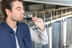 男性生产者酒 免版税库存照片