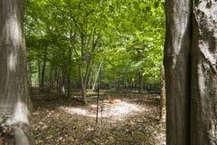 男性白色被盯梢的鹿在环境Forrest里 免版税库存照片