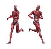 男性肌组织赛跑 免版税库存图片