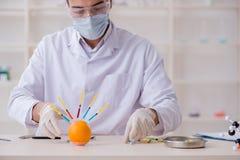 男性营养专家的测试食品在实验室 免版税库存图片