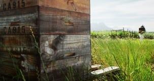 男性蜂农运载的蜂窝箱子 影视素材
