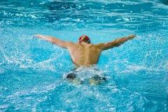 男性运动员游泳蝴蝶,从后面的看法 库存图片