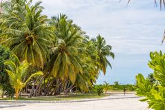 男性,马尔代夫- 2016年11月18日:好的热带海滩看法与可可椰子树,马尔代夫海岛的 复制文本的空间 库存图片