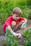 男婴儿童开掘测试花花盆从事园艺的绿色植物塑料作用铁锹小孩 库存图片