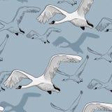 画的白色飞行天鹅的无缝的样式的例证 手拉,与鸟的乱画图形设计 包裹 库存照片
