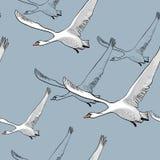 画的飞行的群天鹅的无缝的样式的例证 手拉,与鸟的乱画图形设计 包裹 向量例证