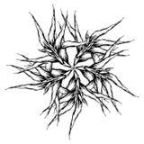 画纹身花刺的用手画与墨水 锋利的花 ?? 岩石样式 向量例证
