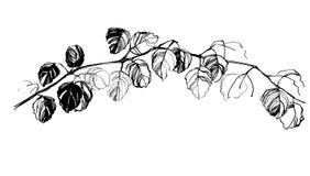 画草本树桦树的手 库存照片