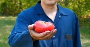 画象人,草帽的一位农夫,一件运转的长袍拾起蕃茄 股票视频