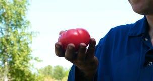 画象人,草帽的一位农夫,一件运转的长袍拾起蕃茄 股票录像