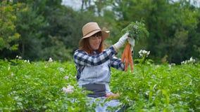 画象妇女用有机红萝卜在一个菜园里 股票录像