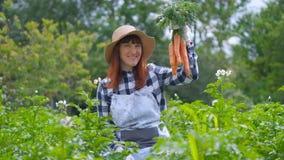 画象妇女用有机红萝卜在一个菜园里 影视素材