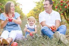 画象愉快微笑和laughting做父母与逗人喜爱的小女儿获得乐趣在pomegrate果子庭院 收获,家庭 免版税库存照片