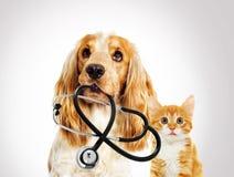 画象狩医狗西班牙猎狗和小猫 免版税库存图片