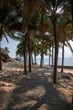 界限海岛陵水椰子足迹 免版税图库摄影
